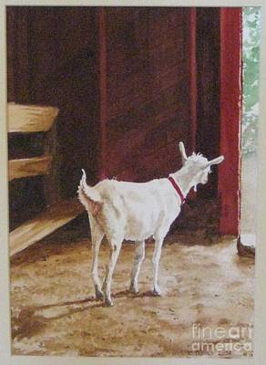Saanen Goat Painting - Curious Kid by Carla Dabney