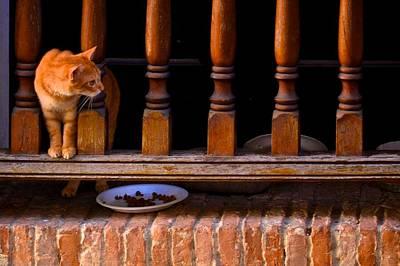 Curious Kitty Print by Ricardo J Ruiz de Porras