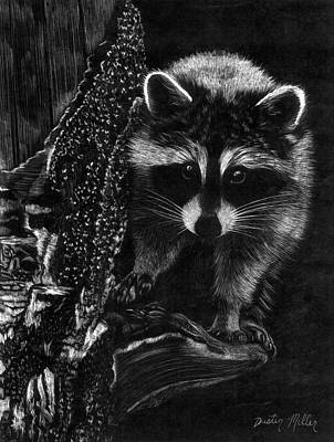 Raccoon Drawing - Curious Raccoon by Dustin Miller