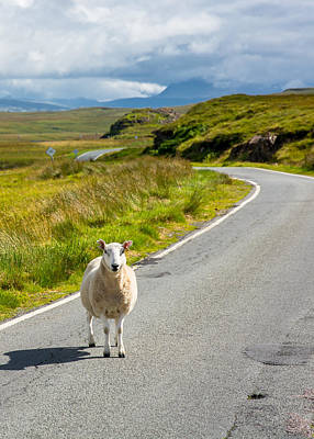 Curious Sheep On Scottish Road Print by Andreas Berthold