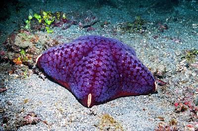 Cushion Starfish On Sea Bed Print by Georgette Douwma
