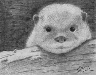 Otter Drawing - Cute Baby Otter by Raluca Feresteanu