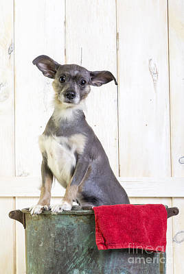 Cute Puppy Photograph - Cute Dog Washtub by Edward Fielding