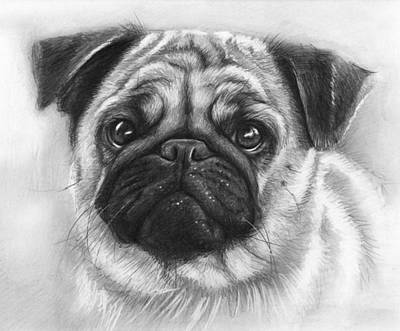 Pug Drawing - Cute Pug by Olga Shvartsur
