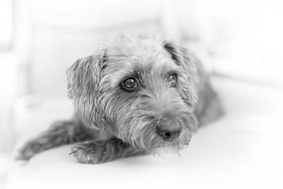 Pup Digital Art - Cute Pup On Watch by Natalie Kinnear