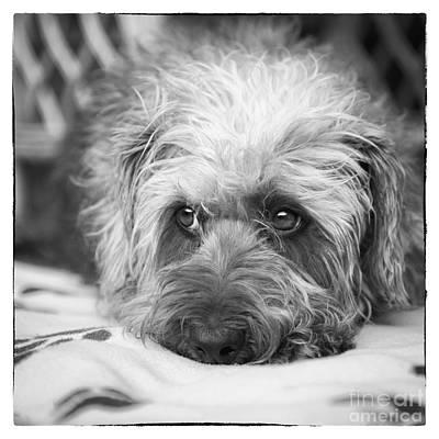 Cute Dog Digital Art - Cute Scruffy Pup In Black And White by Natalie Kinnear