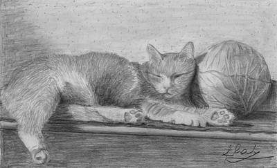 Cabbage Drawing - Cute Sleeping Cat 1 by Raluca Feresteanu