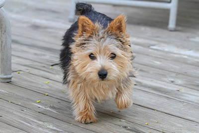 Dog Photograph - Cutest Dog Ever - Animal - 011326 by DC Photographer