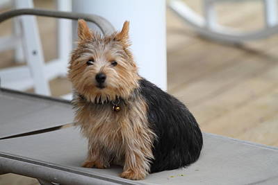 Dog Photograph - Cutest Dog Ever - Animal - 011336 by DC Photographer