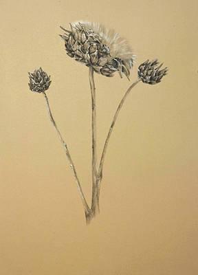 Artichoke Drawing - Cynara Globe Artichoke by Linda Harrison-parsons