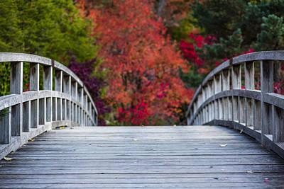 Cypress Bridge Print by Sebastian Musial