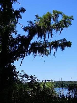 Cypress Overhang Original by Warren Thompson