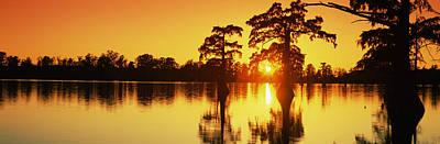 Cypress Trees At Sunset, Horseshoe Lake Print by Panoramic Images