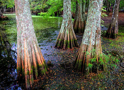 Algae Photograph - Cypress Waltz by Karen Wiles