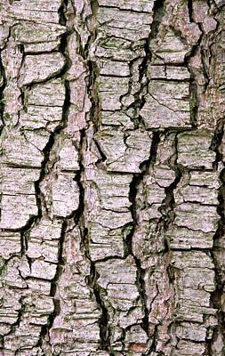Cyprus Photograph - Cyprus Cedar Bark Abstract by Nigel Downer
