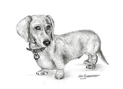 Doxie Drawing - Dachshund by Jim Hubbard