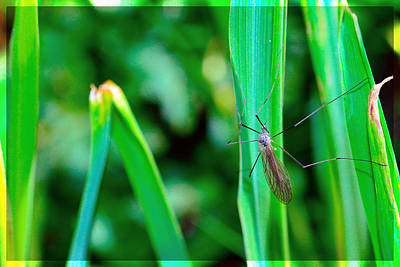 Crane Mixed Media - Daddy Long Legs  by Toppart Sweden