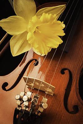 Violin Bows Violin Bows Photograph - Daffodil And Violin by Garry Gay