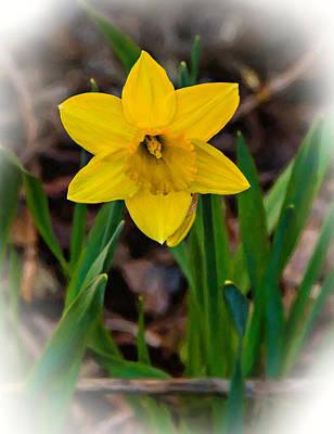 Flowers Photograph - Daffodil Oil by Steve Harrington