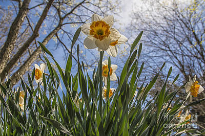 Flutter Photograph - Daffodil Sun by Terry Rowe
