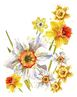 Daffodils Painting - Daffodil Watercolor by Alison Fennell