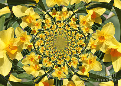 Abstract Photograph - Daffodils Burst Kaleidoscope by Carol Groenen