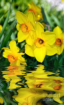 Genus Photograph - Daffodils By The Lake by Kaye Menner