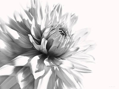 Platinum Photograph - Dahlia Flower In Monochrome by Jennie Marie Schell