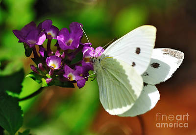 Dainty Butterfly Print by Kaye Menner