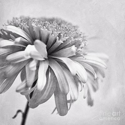 Blume Photograph - Dainty Daisy by Priska Wettstein