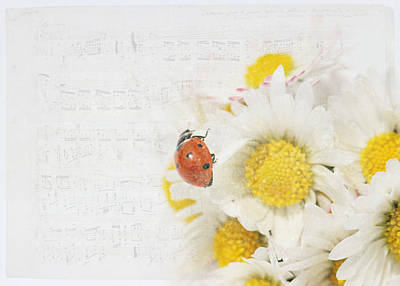 Flower Still Life Mixed Media - Daisies And Ladybug by Heike Hultsch