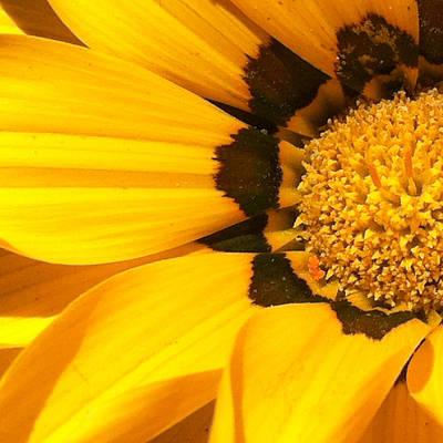 Sunburst Floral Still Life Photograph - Daisy 1-5 by Ann Pelaez