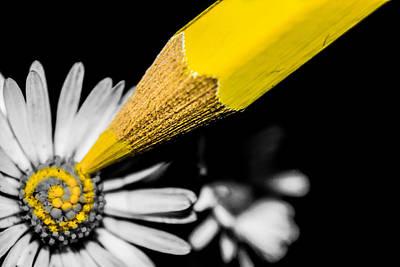 Colored Pencil Photograph - Daisy Art by Ian Hufton