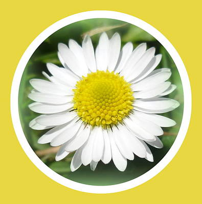 Daisy Closeup Print by The Creative Minds Art and Photography