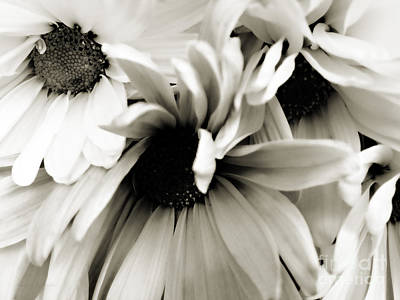 Daisy Cluster In Black And White Print by Nancy E Stein