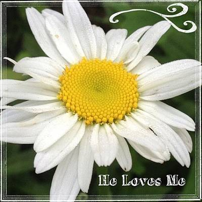 Daisies Photograph - #daisy #doodle #helovesme #flower by Teresa Mucha