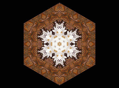 Kaleidoscope Digital Art - Daisy Pattern Mandala - S0125 by Variance Collections
