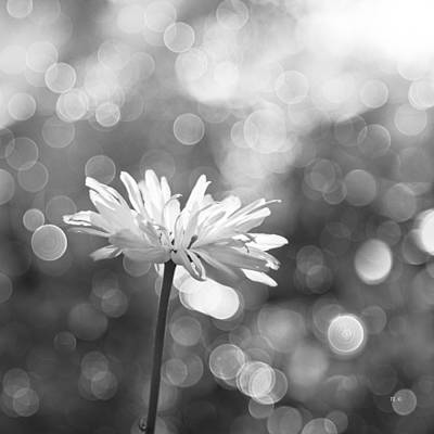 Rain Drops Photograph - Daisy Rain by Theresa Tahara