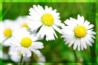 Spring Scenes Mixed Media - Daisy by Toppart Sweden