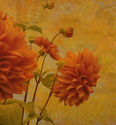Dalias In Orange And Yellow Print by Jeff Burgess