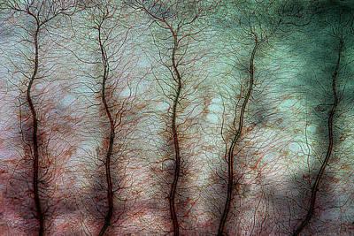 Damselfly Larva Gill Print by Marek Mis