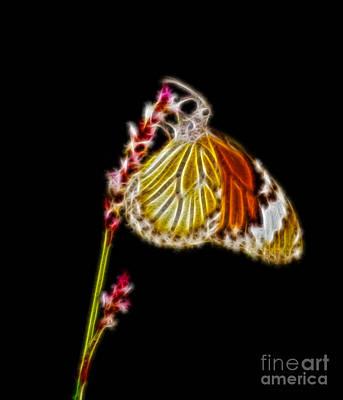 Fractal Design Digital Art - Danaus Genutia Butterfly Fractal Art by Image World