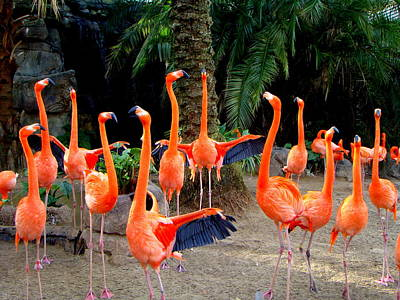 Dance Of The Flamingos Print by Phyllis Beiser