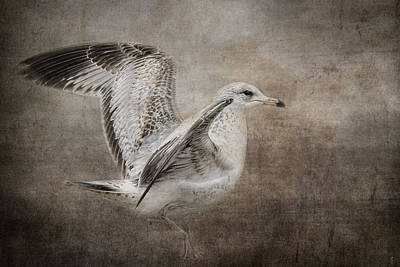 Larus Delawarensis Photograph - Dance Of The Lone Gull by Jai Johnson
