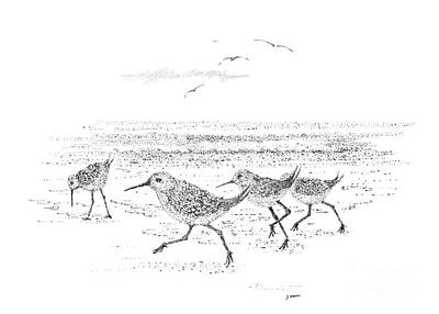 Sandpiper Drawing - Dance Of The Sandpipers by Steve Knapp