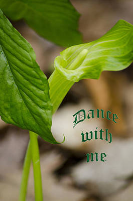Leaves Photograph - Dance With Me Jack by LeeAnn McLaneGoetz McLaneGoetzStudioLLCcom