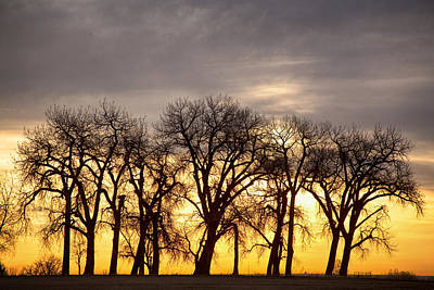 Tree Art Photograph - Dancing To The Sunset by James BO  Insogna