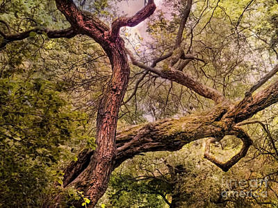 Nature Photograph - Dancing Trees by Justyna JBJart