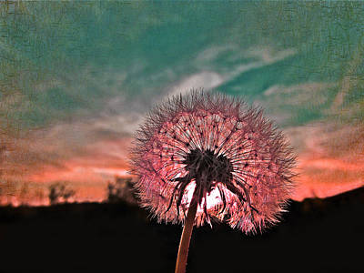 Dandelion At Sunset Print by Marianna Mills