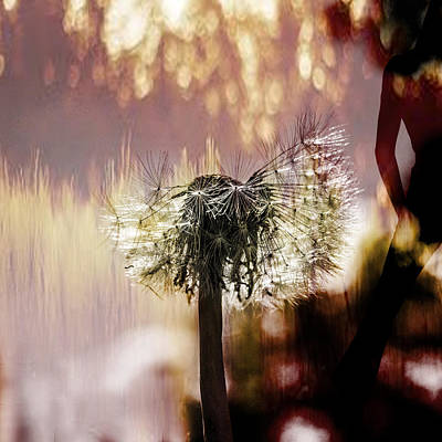 Dandelion In Summer Print by Toppart Sweden